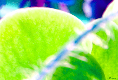 green, light, digital, art, photo, plant, nature, fine, details, amazing, suzanne, coleman, artofageniusmind, genius, mind
