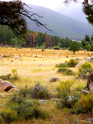 elk, meadow, field, rockies, rocky mountain national park, nature, landscape, outdoors, outside, america, usa, west, park, suzanne, coleman, artofageniusmind, yellow,