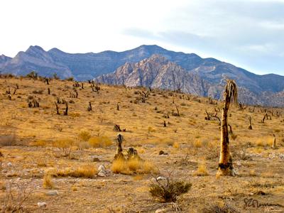 desert, west, america, USA, mountains, plants, fire, burned, brush, suzanne, coleman, artofageniusmind, cloud, sky, landscape, unique, photo