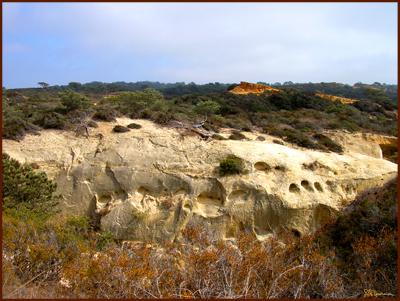 cliff, cliffs, sea, ocean, california, san diego, sun, buckwheat, sky, nature, landscape, suzanne, coleman, artofageniusmind, genius