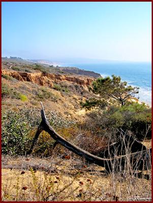 lizard, california, desert, coast, west coast, landscape, USA, America, sky, cliffs, cliff, suzanne, coleman, artofageniusmind, photography, image, art, display