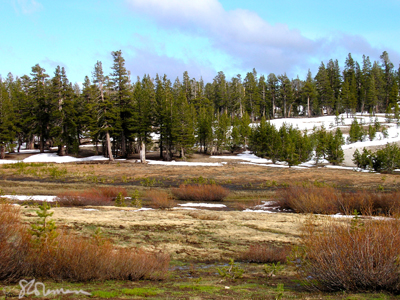 mountaintop, meadow, tahoe, nevada, park, lake, mountain, sierra, sierras, snow, gravel, pine, trees, marsh, sky, clouds, blue, red, green, white, art, photo, landscape, photography, original, peaceful, expansive, suzanne, coleman, artofageniusmind, wetland, forest, ridge, climb