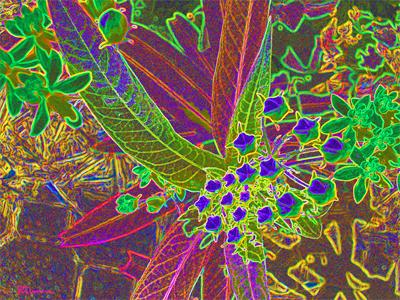 illinois, prairie, native, plant, flower, bud, leaves, leaf, suzanne, coleman, nature, art, digital, photo, new, unique, artofageniusmind, genius, geometric, geometry, form, line, lines, bright, green, pink, yellow, girlie, imagination, imaginative