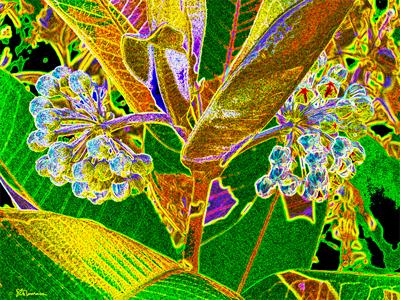 plant, illinois, native, prairie, plant, art, photo, digital, colorful, leaf, leaves, buds, flowers, suzanne, coleman, artofageniusmind, genius, new, linear, unique, geometric, geometry