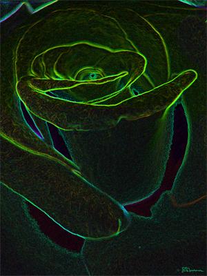 rose, flower, photo, digital, art, nature, plant, green, swirl, dark, black, depth, patterns, suzanne, coleman, artofageniusmind