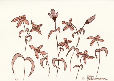 brown, flowers, dancing, dance, drawing, pencil, colored, dry, fall, autumn, season, nature, art, outdoors, signed, suzanne, coleman, artofageniusmind