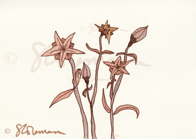 brown, flowers, unique, original, drawing, art, paper, shape, shades, flowing, movement, suzanne, coleman, artofageniusmind, signed