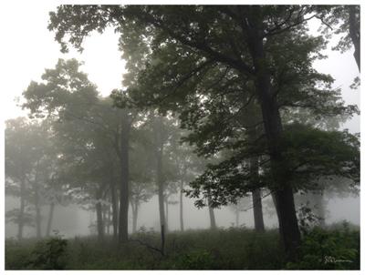 Ft. Sheridan, Fort Sheridan, north shore, northshore, Chicago, park, preserve, fog, weather, landscape, oak, tree, nature, savannah, haze, dream, imagination, illinois, outdoors