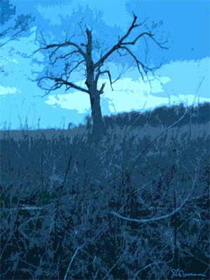 glowing, tree, art, nature, illinois, graphic, gloomy, design, prairie, outdoors, suzanne,coleman, artofageniusmindas