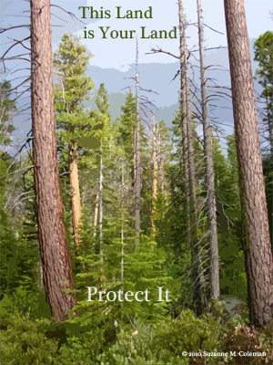 this, land, your, land, lake, tahoe, trees, tree, pine, protect, conserve, preserve,forest, nature, park, outdoors, graphic, campaign, art, design, text, layout, mountains, west, us, US, america, suzanne, coleman, artofageniusmind