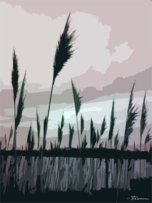 lake, reed, nature, plants, clouds, sky, digital, art, graphic, design, simple, lines, shapes, colors, water, lake, pond, reeds, wetland, park, comlara, suzanne, coleman, artofageniusmind