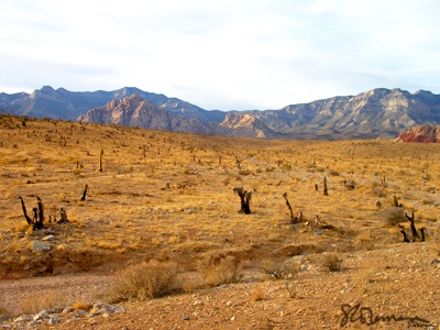 desert, red, rock, red rock, nevada, burned, plant, nature, landscape, yellow, dry, sand, mountain, nature, awesome, sky