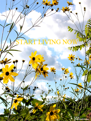 start, living, now, art, nature, outdoors, illinois, prairie, yellow, flower, sky, cloud, cumulous, sumac, black, walnut, plant, sun, sunny, positive, phrase, thinking, outlook, support, supportive, black-eyed susan, daisy